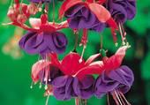fleur élaborée