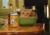 Chat en salade
