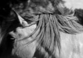 Cheval Noir et Blanc Ombres