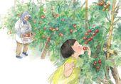 cueillette de la tomate
