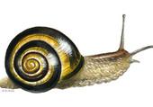Dessin escargot