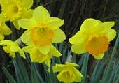 Puzzle Fleurs du printemps