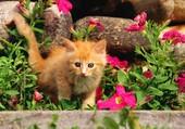 Puzzle Un chaton dans mon jardin