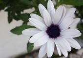 Pureté d'une fleur blanche