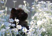 Adorable petit chat