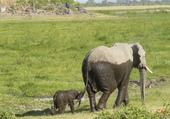 Puzzle Bain de boue pour éléphants