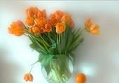 Un bouquet de tulipes orange