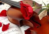 Un violon et une rose