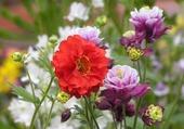 Fleurs du jardin 1