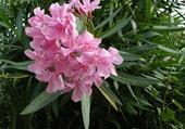 Puzzle jolie fleur