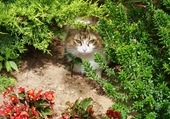 Chatte dans un jardin