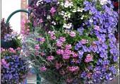 Une suspension de fleurs