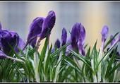 Puzzle C'est l'printemps