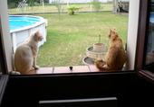 Puzzle chats à la fenêtre
