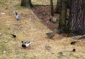 Puzzle Invasion dans notre jardin.