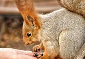 Ecureuil entrain de manger dans la main