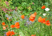 mon jardin sauvage