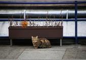 Puzzle Le petit chat de Vienne