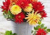 bouquet de dalhias