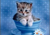 Mignon chaton