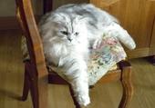 Euréka mon petit chat