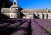 Abbaye de Sénanque, Gordes.