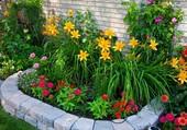 Un massif de fleurs colorées