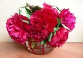 pivoines rouges en vase