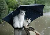 Puzzle chat  sous la pluie