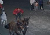 Spectacle de chevaux