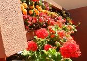 Muret de fleurs 1