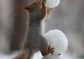 Ecureuil en hiver