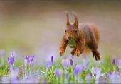 Saut d'ecureuil
