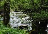 Rivière vosgienne