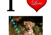 Puzzle I Love Jaguar