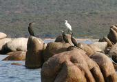 Cormorans et aigrettes