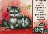 joli chatons