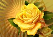 Rose jaune de mai