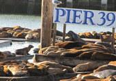 Puzzle LE PIER39 - SAN FRANCISCO