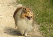 notre chien Coyotte