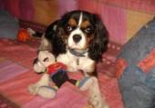 Chanel présente sa poupée
