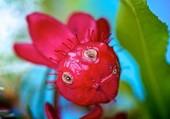 sourire floral