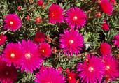 fleurs du portugal