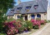Maison bretonne et hortensias