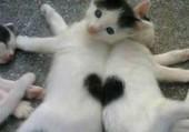 love - chatons