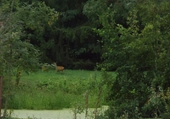 chevreuil au liajou