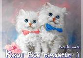 Puzzle adorable chatons