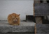 Le petit chat roux.