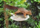 Un écureuil curieux