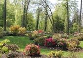 Jardin de rhododendrons